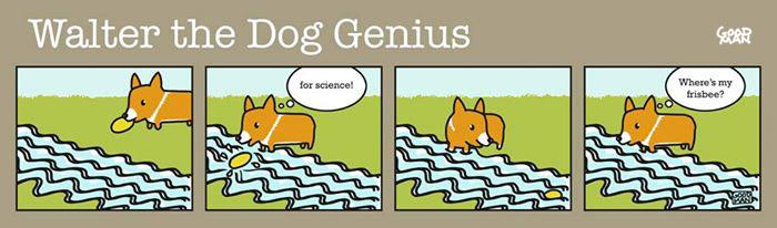 Genius in Dogs